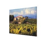 Europe, France, Bonnieux. Vineyards cover the Canvas Print