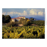 Europe, France, Bonnieux. Vineyards cover the Card