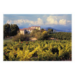 Europe, France, Bonnieux. Vineyards cover the Photo Print