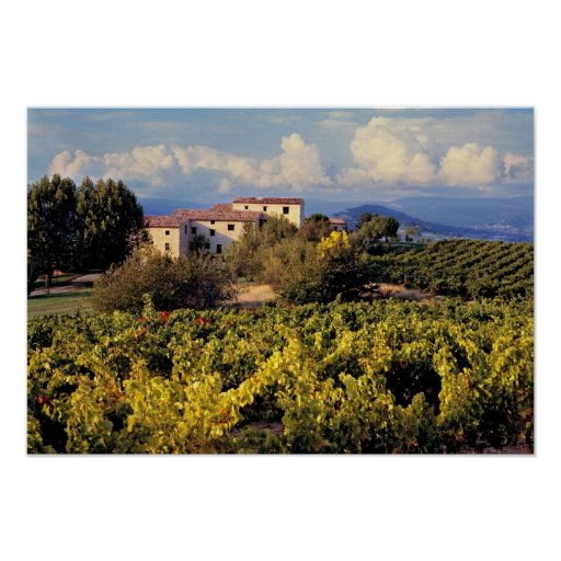 Europe, France, Bonnieux. Vineyards cover the Poster