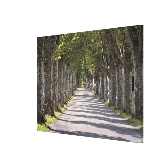 Europe, France, Cereste. Trees line this road Canvas Print
