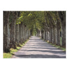 Europe, France, Cereste. Trees line this road Photo Print