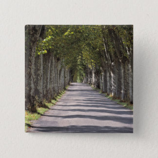 Europe, France, Cereste. Trees line this road Pinback Button