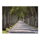 Europe, France, Cereste. Trees line this road Postcard