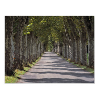 Europe, France, Cereste. Trees line this road Poster
