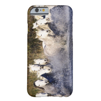Europe, France, Ile del la Camargue. Camargue 2 Barely There iPhone 6 Case
