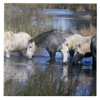 Europe, France, Ile del la Camargue. Camargue Ceramic Tile