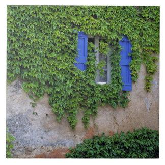 Europe, France, Lourmarin. Cascading ivy Large Square Tile