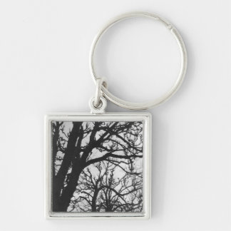 Europe, France, Paris. Winter trees, Marco Keychain