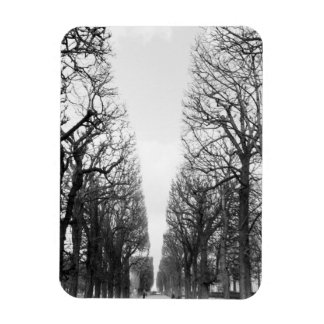 Europe, France, Paris. Winter trees, Marco Polo Magnet