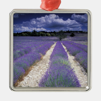 Europe France Provence Lavander fields Ornaments