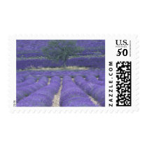 Europe, France, Provence, Sault, Lavender fields 2 Postage