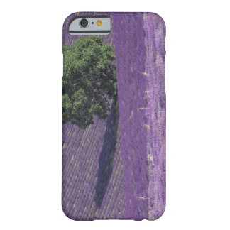 Europe, France, Provence, Sault, Lavender fields Barely There iPhone 6 Case