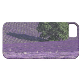 Europe, France, Provence, Sault, Lavender fields iPhone SE/5/5s Case