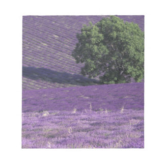 Europe, France, Provence, Sault, Lavender fields Notepad