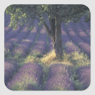 Europe France Provence Sault Lavender Stickers