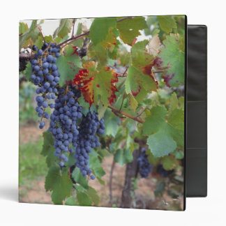 Europe, France, Roussillon. Vineyards, with 3 Ring Binders