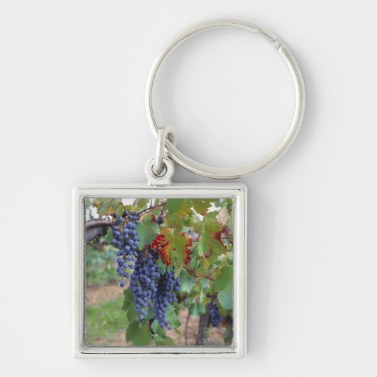 Europe, France, Roussillon. Vineyards, with Keychain