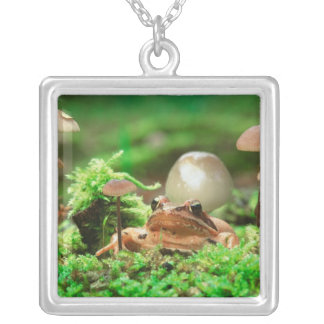 EUROPE, Germany, Baltic Sea, Island of Ruegen. Silver Plated Necklace