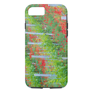 Europe, Italy, Tuscany. Colorful red poppies in iPhone 8/7 Case