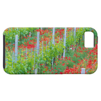 Europe, Italy, Tuscany. Colorful red poppies in iPhone SE/5/5s Case