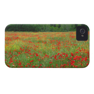 Europe, Italy, Tuscany, red poppies in field. Case-Mate iPhone 4 Cases