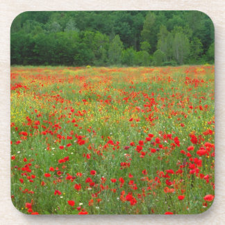 Europe, Italy, Tuscany, red poppies in field. Coaster