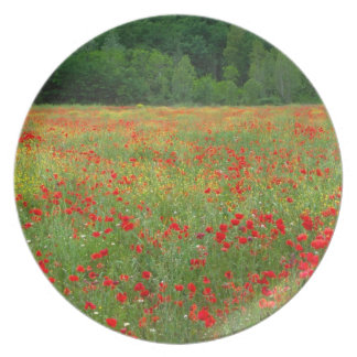 Europe, Italy, Tuscany, red poppies in field. Dinner Plate