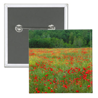 Europe, Italy, Tuscany, red poppies in field. Pinback Button