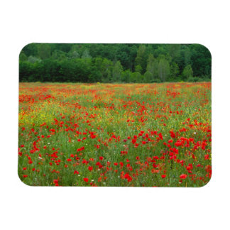 Europe, Italy, Tuscany, red poppies in field. Vinyl Magnet