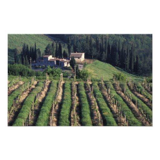 Europe, Italy, Tuscany. Scenic villa cyprus. Photo Print