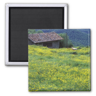 Europe, Italy, Tuscany, Siena, Chianti. 2 Inch Square Magnet