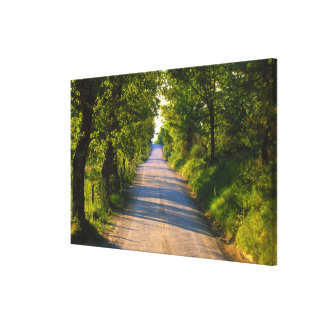 Europe, Italy, Tuscany, tree lined road Canvas Print