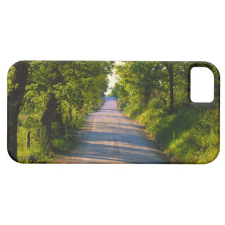 Europe, Italy, Tuscany, tree lined road iPhone 5 Cases