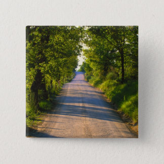 Europe, Italy, Tuscany, tree lined road Pinback Button