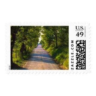 Europe, Italy, Tuscany, tree lined road Postage