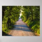 Europe, Italy, Tuscany, tree lined road Poster