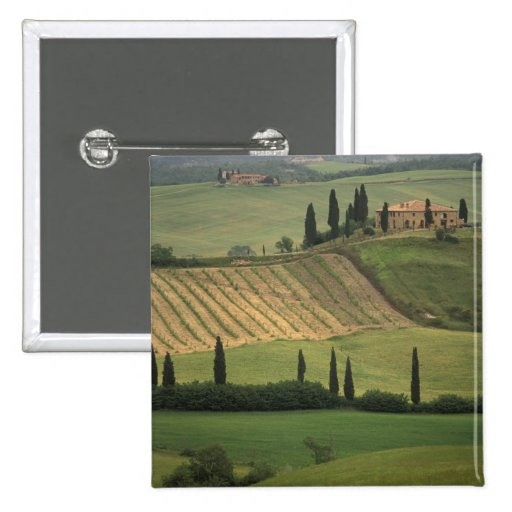 Europe, Italy, Tuscany, Val d' Orcia, Tuscan Button