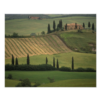 Europe, Italy, Tuscany, Val d' Orcia, Tuscan Print