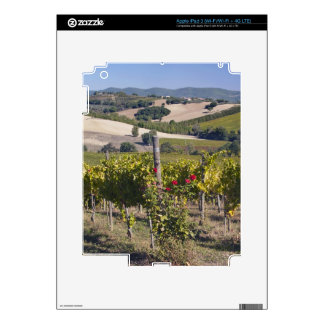 Europe, Italy, Umbria, near Montefalco, Vineyard Decals For iPad 3