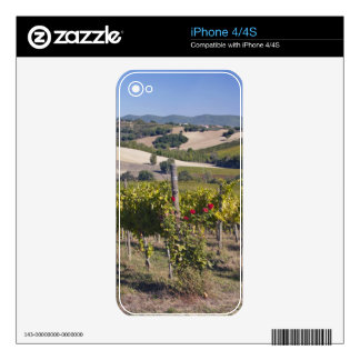 Europe, Italy, Umbria, near Montefalco, Vineyard Decal For iPhone 4