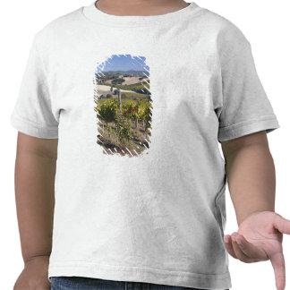 Europe, Italy, Umbria, near Montefalco, Vineyard Shirt