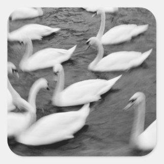 Europe Lucerne Switzerland Swans on the Reuss Sticker