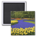 Europe, Netherlands, Holland, Lisse, Keukenhof 2 Inch Square Magnet