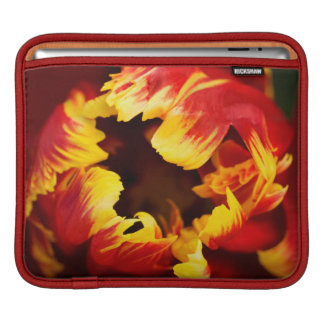 Europe, Netherlands, Lisse. Parrot tulip Sleeves For iPads
