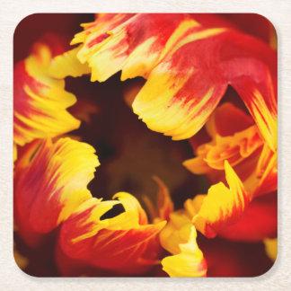 Europe, Netherlands, Lisse. Parrot tulip Square Paper Coaster