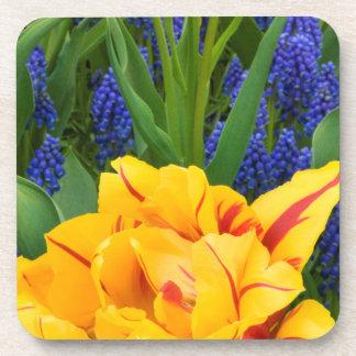 Europe, Netherlands, Lisse. Tulips Coaster