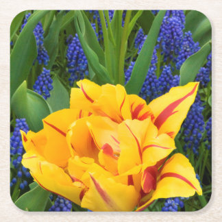 Europe, Netherlands, Lisse. Tulips Square Paper Coaster
