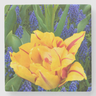 Europe, Netherlands, Lisse. Tulips Stone Coaster