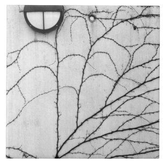 Europe, Switzerland, Lucerne. Ivy pattern on Large Square Tile